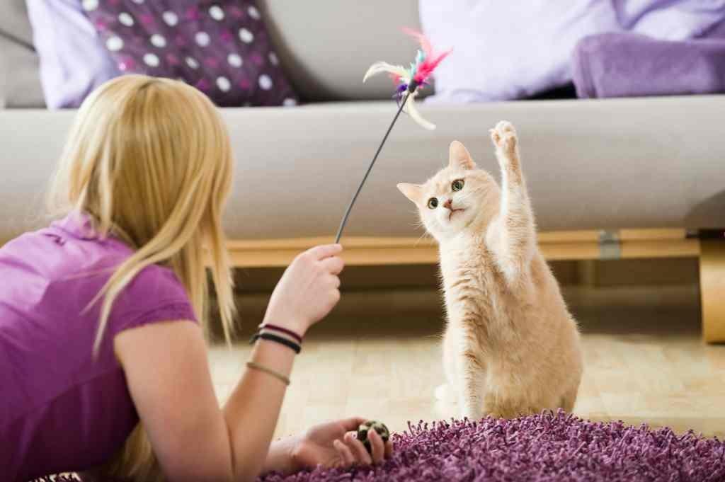 Gato em Apartamento